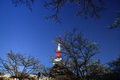 201104sakura2
