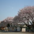 2008sakura06
