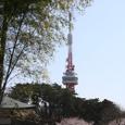2008sakura16