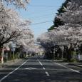 2008sakura24