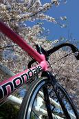 新川の桜とCAAD9