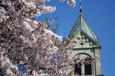 松が峰教会の桜